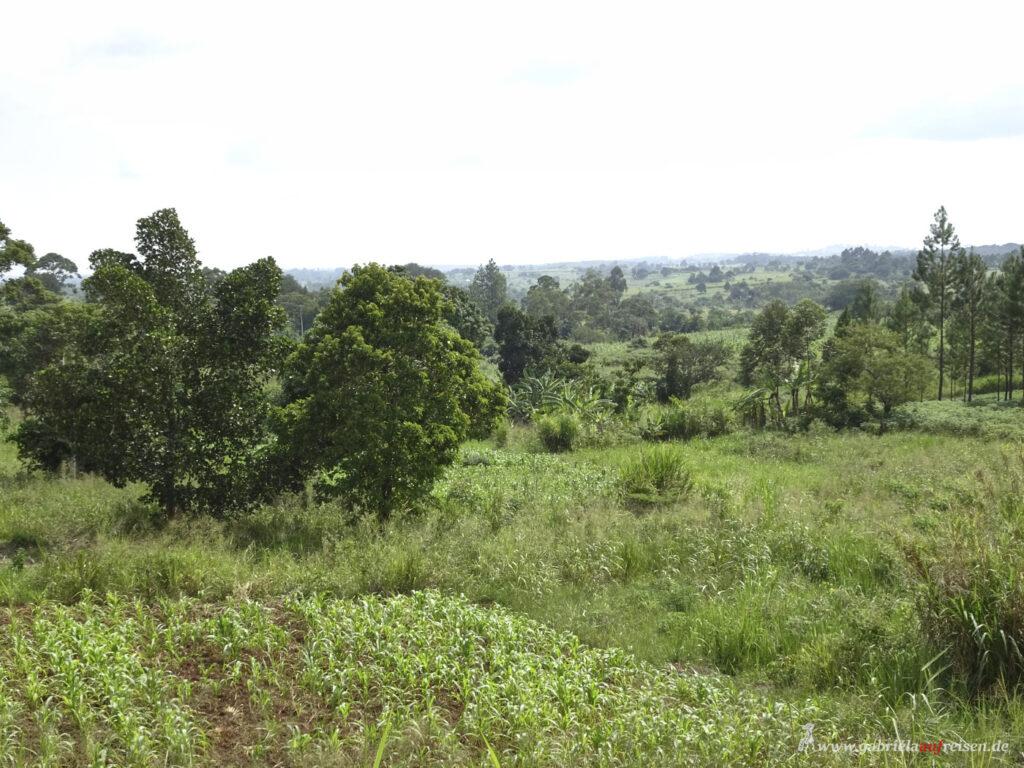 gruenes-Uganda