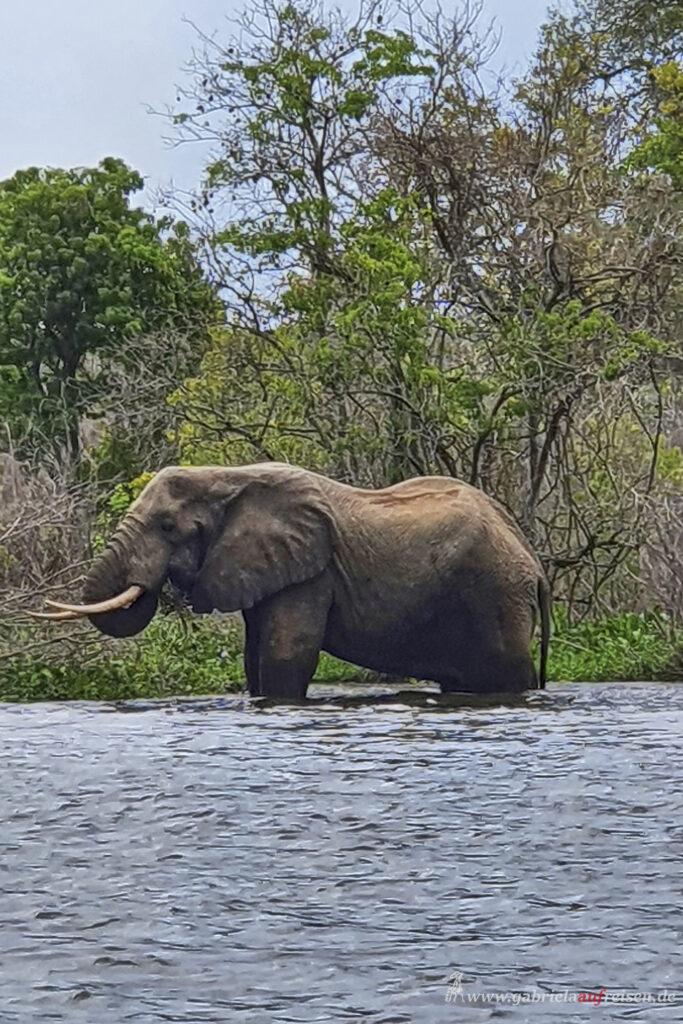Elefant badet im Nil