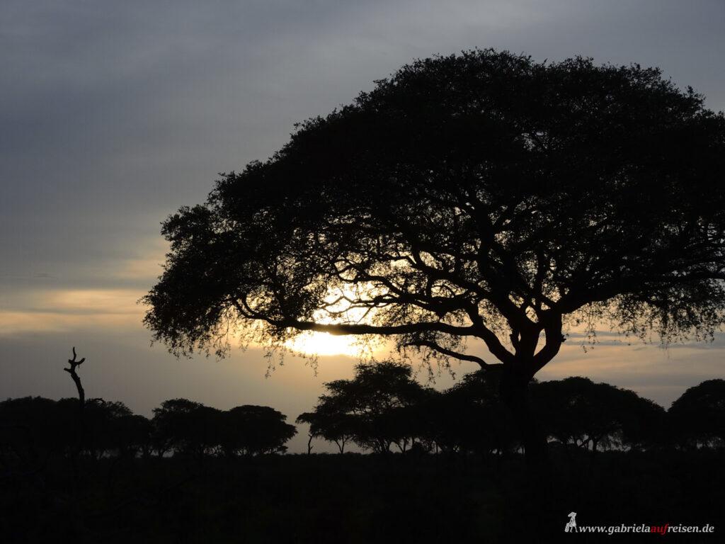 Baum-im-Sonnenuntergang