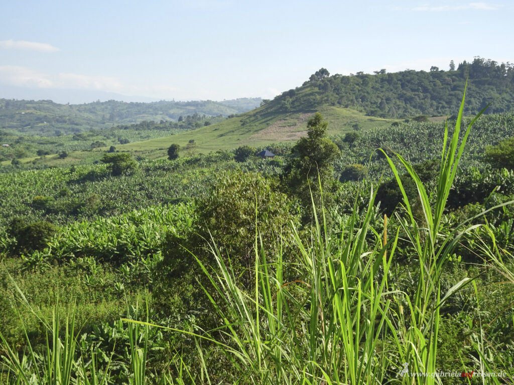 Landschaft-in-Uganda