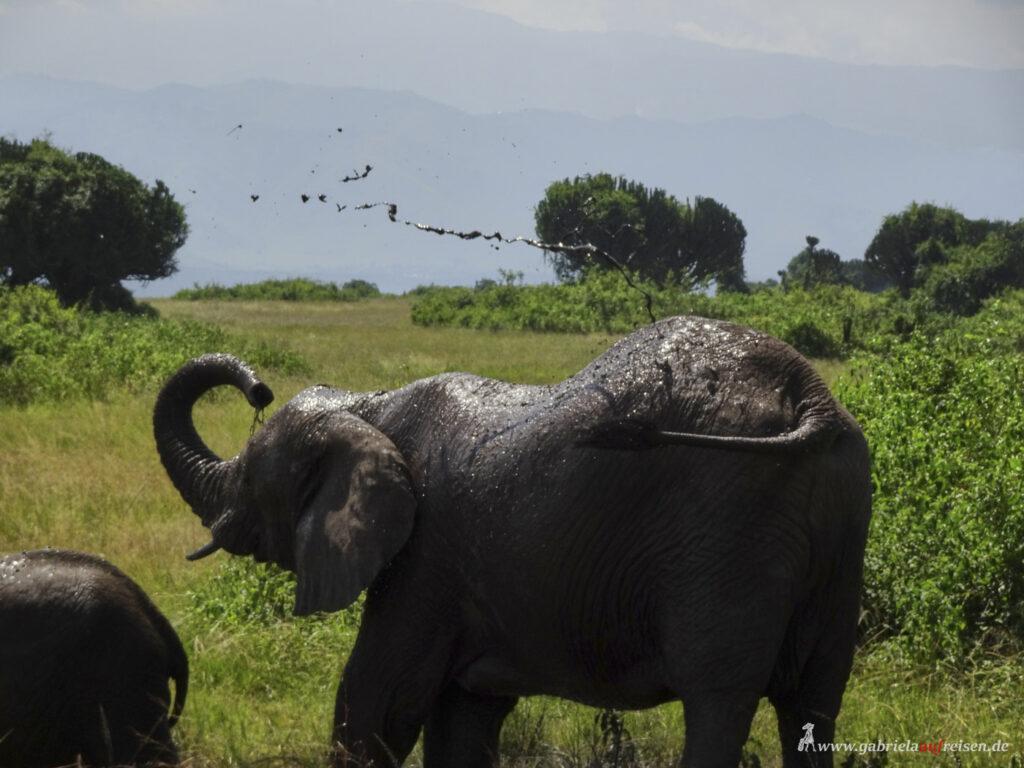 Elefant-kuehlt-sich-ab