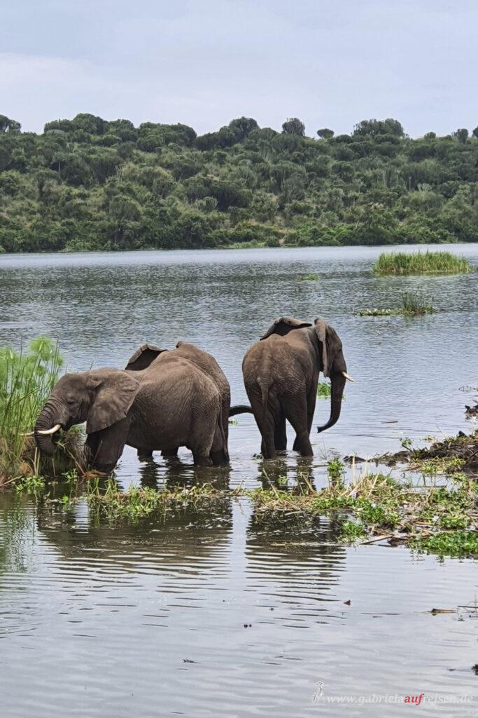 Elefanten-im-Wasser
