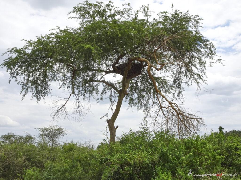 Nest-im-Baum