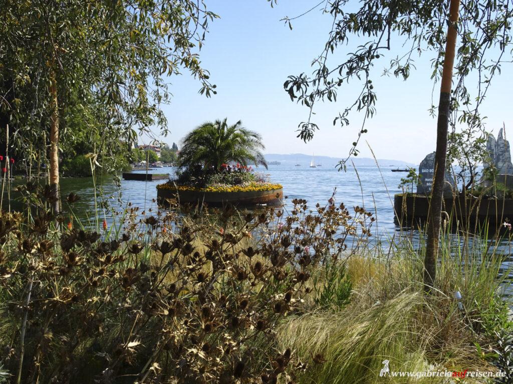 Palme-auf-Schwimmponton-im-Bodensee
